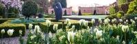 Tulip viridiflora 'Spring Green' and wallflowers in sunken garden