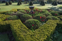 Star shaped Box topiary hedge enclosing sundial, lavender and tulips