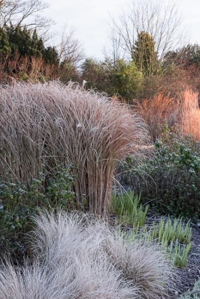 Ornamental grasses in the mid summer garden in winter