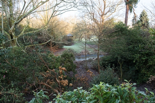 The Garden of Allah  in winter at Borde Hill