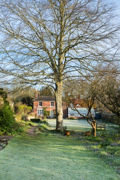 Beech tree dividing the lawn and herbaceous borders from the orchard