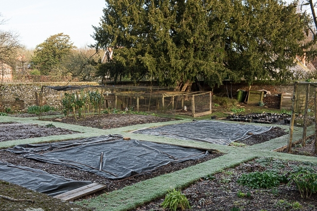 Vegetable garden late winter early spring covered in polythene sheeting to warm up the soil