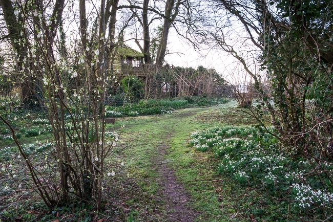 Pathway leading towards tree house with flowering currant Ribes sanguinium 'Elkington's White' and a carpet of snowdrops