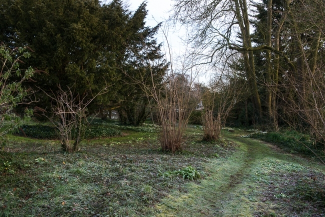 Woodland path with primroses and snowdrops
